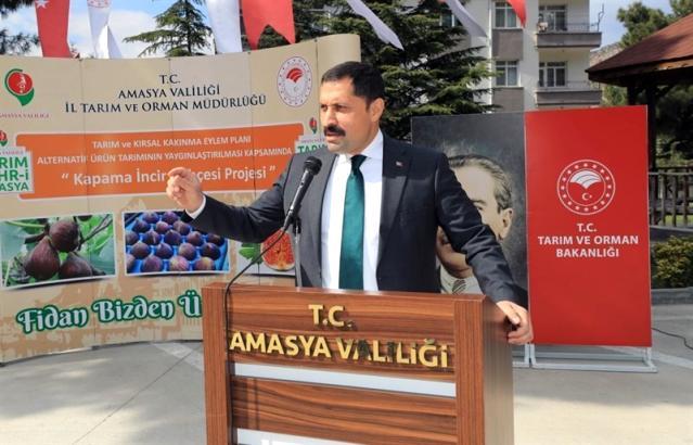 Amasya'da incir, elma ve kiraza alternatif olacak
